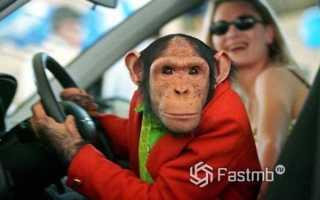 Что может сказать о человеке стиль вождения