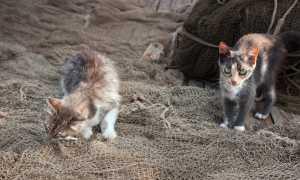 Кот сожрал нитку что делать